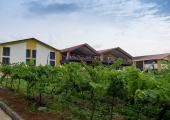 Sula vineyard